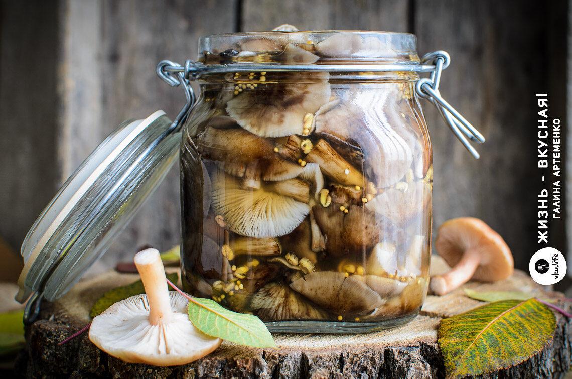 рецепт маринованных грибов опят